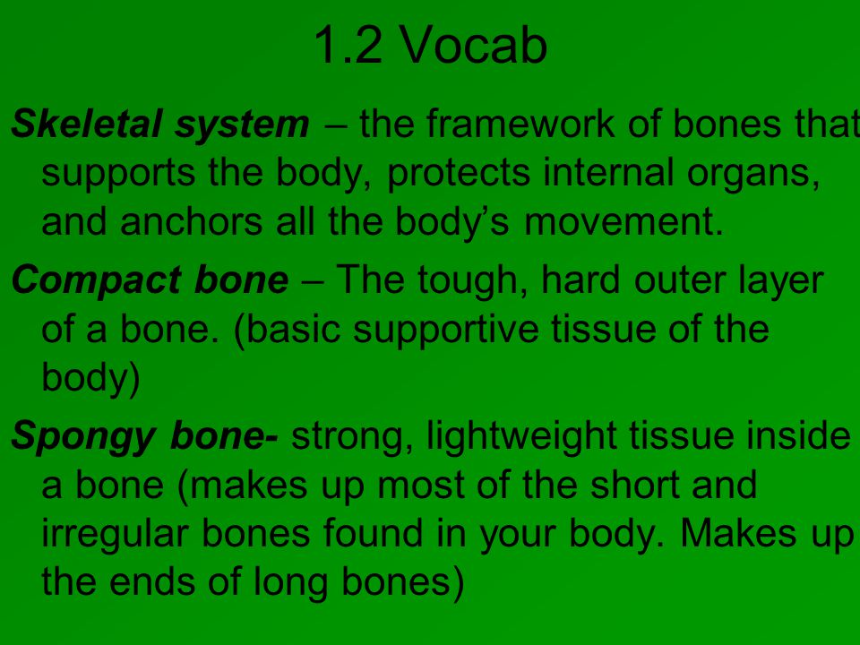 1.2 Vocab Skeletal system – the framework of bones that supports the body, protects internal organs, and anchors all the body's movement.