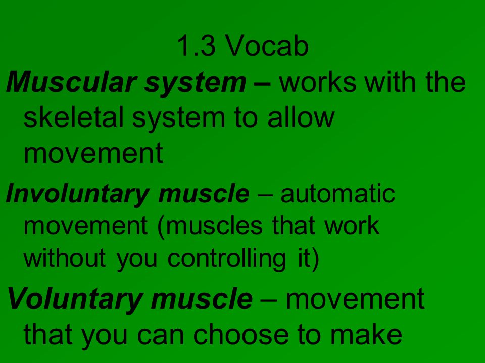 1.3 Vocab Muscular system – works with the skeletal system to allow movement Involuntary muscle – automatic movement (muscles that work without you controlling it) Voluntary muscle – movement that you can choose to make