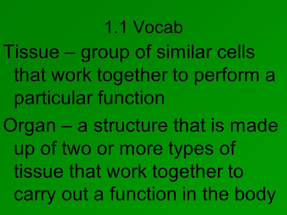 1.1 Vocab Tissue – group of similar cells that work together to perform a particular function Organ – a structure that is made up of two or more types