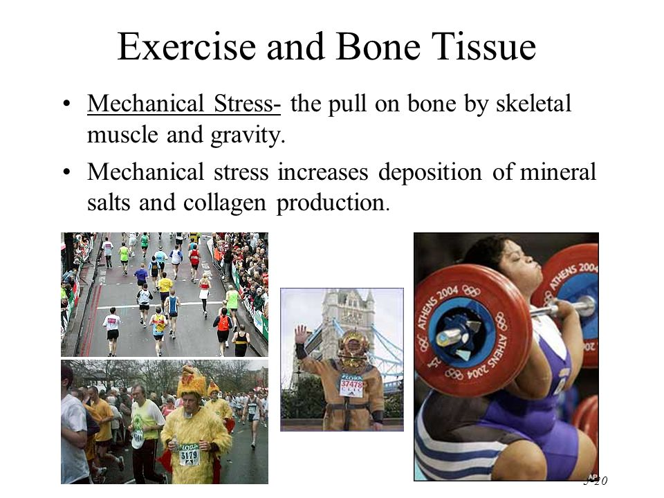 5-20 Exercise and Bone Tissue Mechanical Stress- the pull on bone by skeletal muscle and gravity.