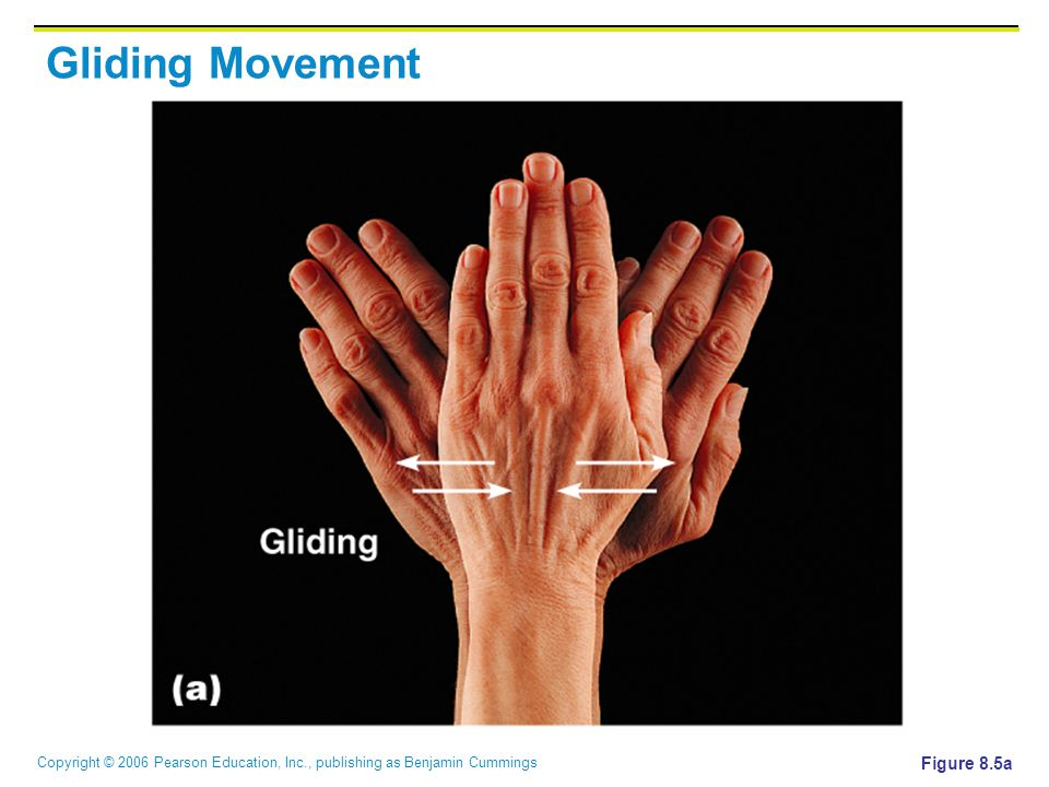 Copyright © 2006 Pearson Education, Inc., publishing as Benjamin Cummings Gliding Movement Figure 8.5a