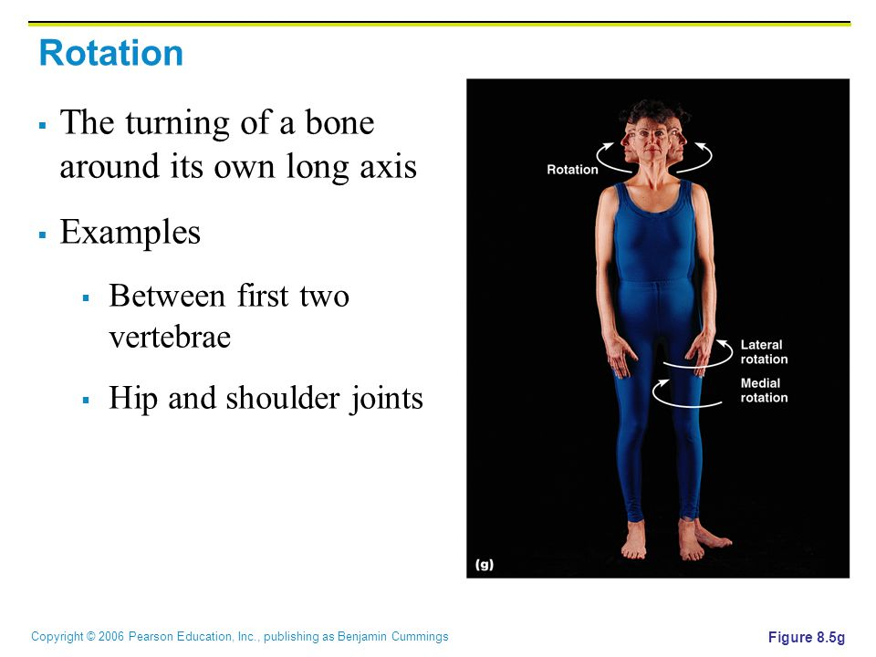 Copyright © 2006 Pearson Education, Inc., publishing as Benjamin Cummings Rotation  The turning of a bone around its own long axis  Examples  Between first two vertebrae  Hip and shoulder joints Figure 8.5g