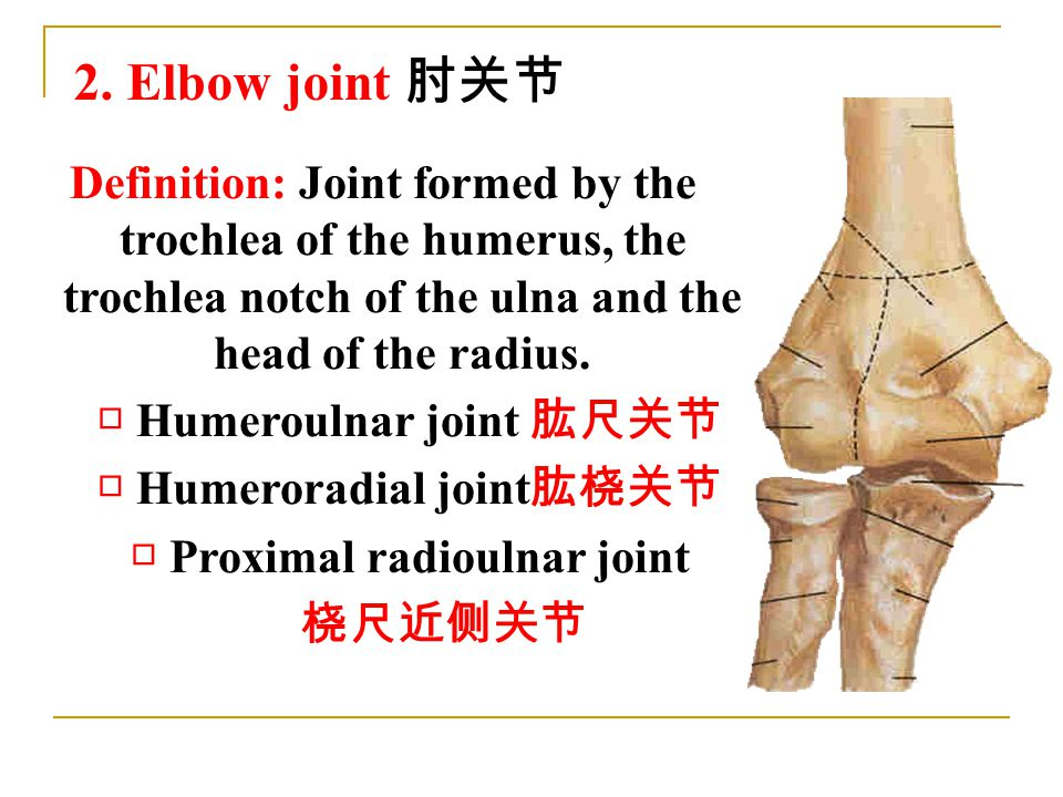 2. Elbow joint 肘关节 Definition: Joint formed by the trochlea of the humerus, the trochlea notch of the ulna and the head of the radius. □ Humeroulnar j