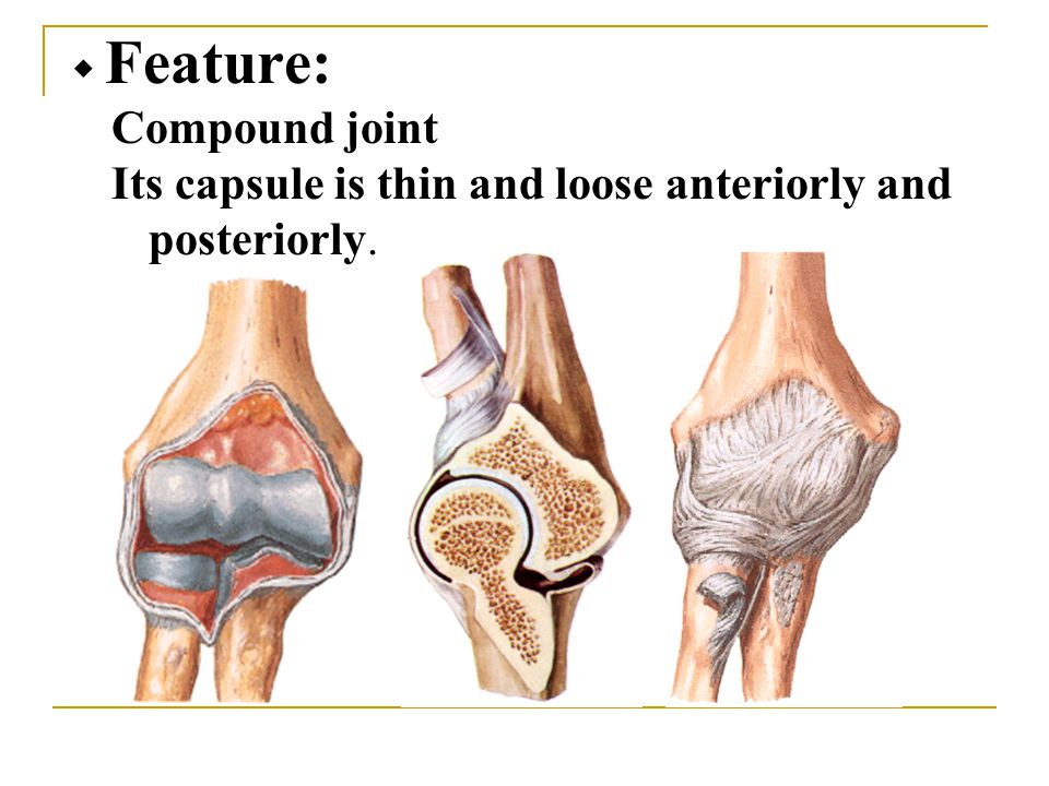 ◆ Feature: Compound joint Its capsule is thin and loose anteriorly and posteriorly.