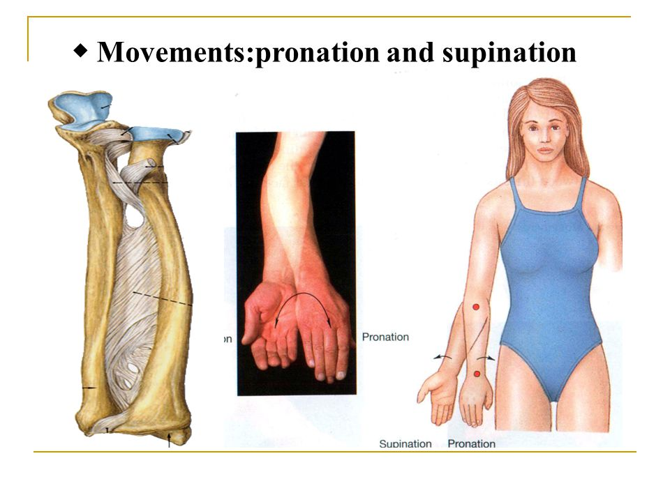 ◆ Movements:pronation and supination