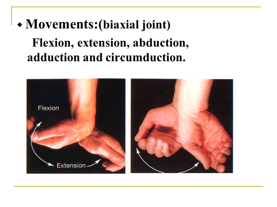 ◆ Movements:( biaxial joint) Flexion, extension, abduction, adduction and circumduction.