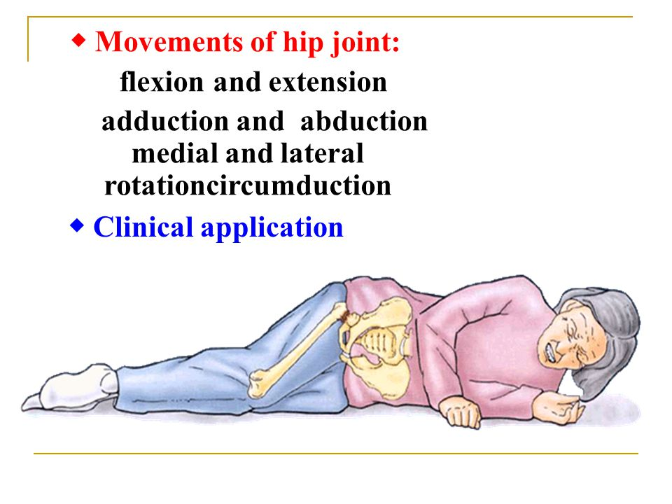 ◆ Movements of hip joint: flexion and extension adduction and abduction medial and lateral rotationcircumduction ◆ Clinical application