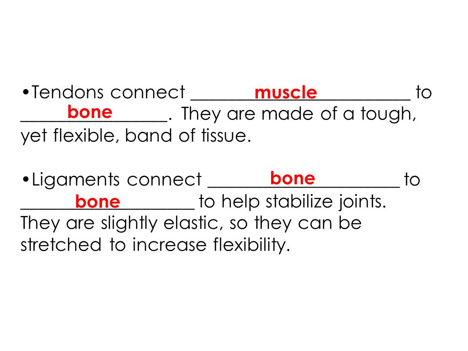 Tendons connect ________________________ to ________________. They are made of a tough, yet flexible, band of tissue. Ligaments connect ______________