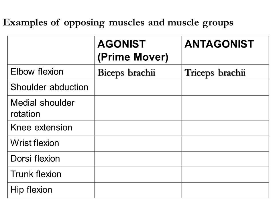 Examples of opposing muscles and muscle groups AGONIST (Prime Mover) ANTAGONIST Elbow flexion Biceps brachii Triceps brachii Shoulder abduction Medial shoulder rotation Knee extension Wrist flexion Dorsi flexion Trunk flexion Hip flexion