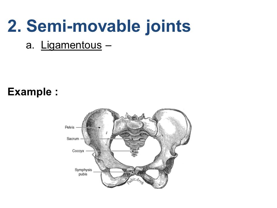 2. Semi-movable joints a. Ligamentous – Example :