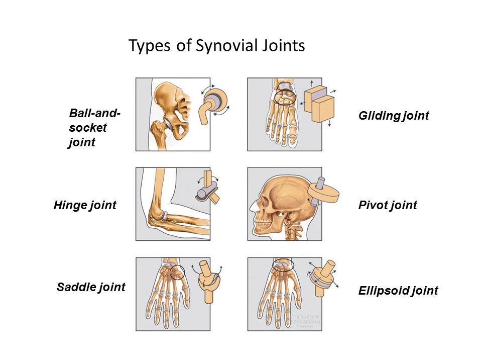 Types of Synovial Joints Ball-and- socket joint Hinge joint Saddle joint Gliding joint Pivot joint Ellipsoid joint
