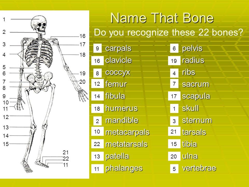 Name That Bone  carpals  clavicle  coccyx  femur  fibula  humerus  mandible  metacarpals  metatarsals  patella  phalanges  pelvis  radius