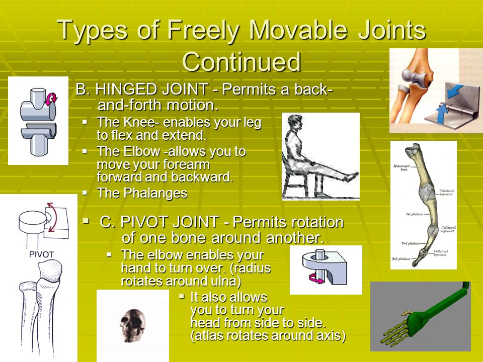 Types of Freely Movable Joints Continued BBBB. HINGED JOINT - Permits a back- and-forth motion. TTTThe Knee- enables your leg to flex and exte