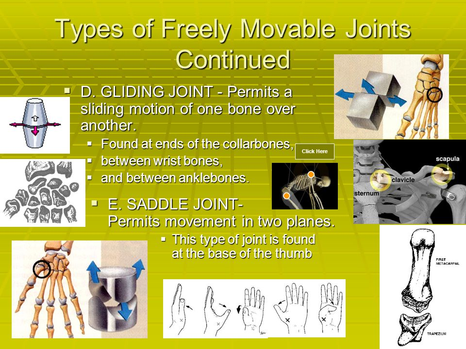  D. GLIDING JOINT - Permits a sliding motion of one bone over another.  Found at ends of the collarbones,  between wrist bones,  and between ankle