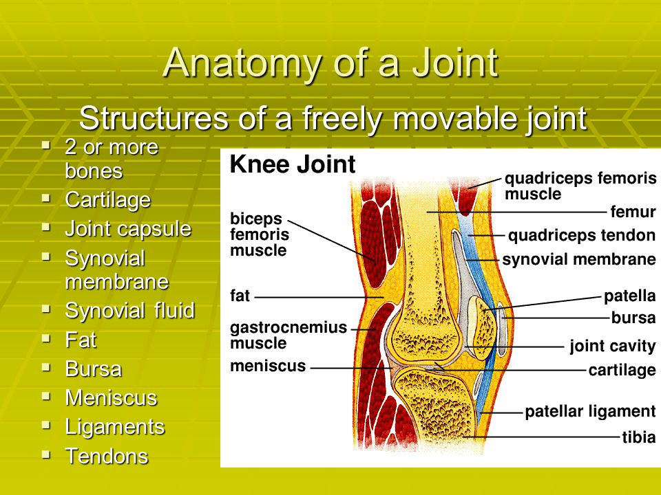 Anatomy of a Joint  2 or more bones  Cartilage  Joint capsule  Synovial membrane  Synovial fluid  Fat  Bursa  Meniscus  Ligaments  Tendons S