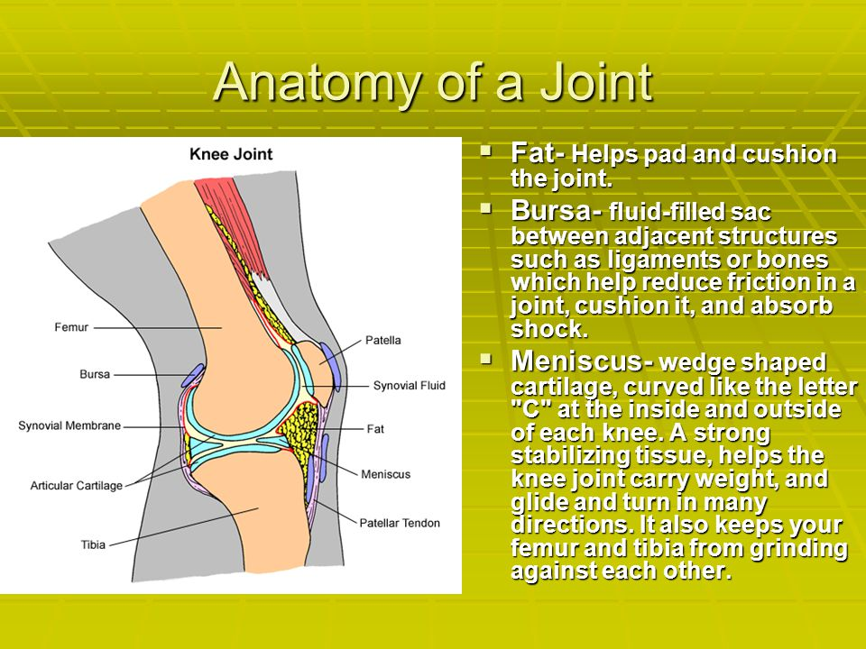 Anatomy of a Joint  Fat- Helps pad and cushion the joint.  Bursa- fluid-filled sac between adjacent structures such as ligaments or bones which help