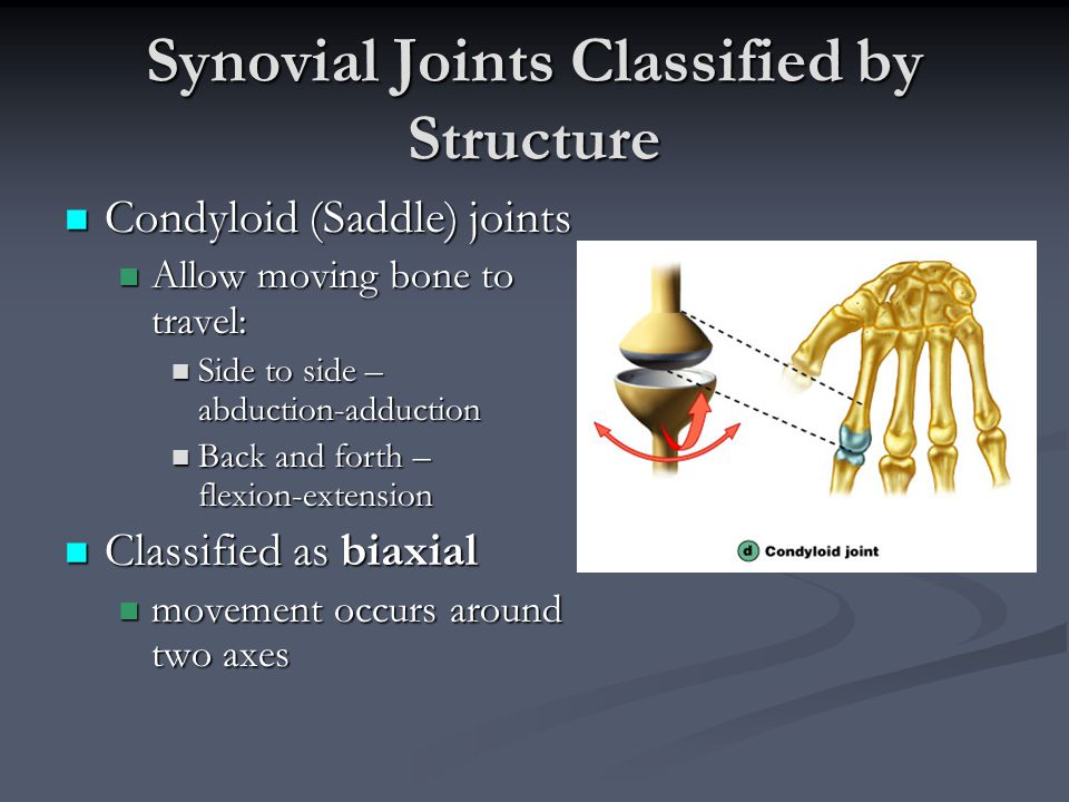 Condyloid (Saddle) joints Condyloid (Saddle) joints Allow moving bone to travel: Allow moving bone to travel: Side to side – abduction-adduction Side