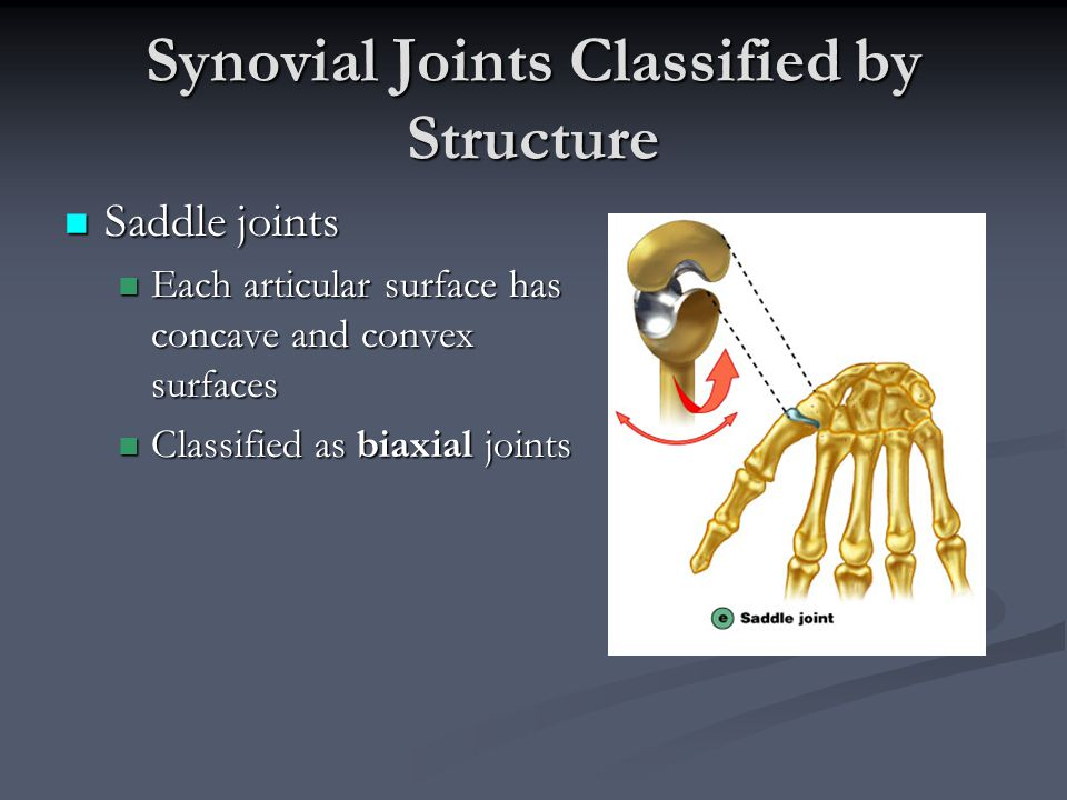 Synovial Joints Classified by Structure Saddle joints Saddle joints Each articular surface has concave and convex surfaces Each articular surface has