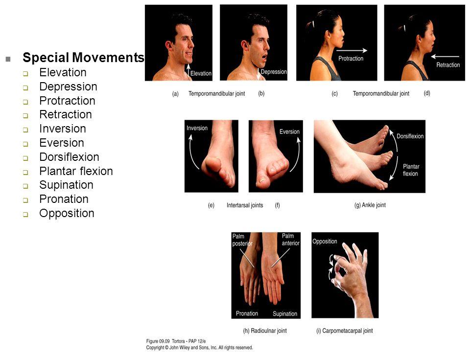 Special Movements  Elevation  Depression  Protraction  Retraction  Inversion  Eversion  Dorsiflexion  Plantar flexion  Supination  Pronation