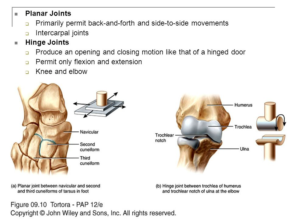 Copyright 2009, John Wiley & Sons, Inc. Planar Joints  Primarily permit back-and-forth and side-to-side movements  Intercarpal joints Hinge Joints 