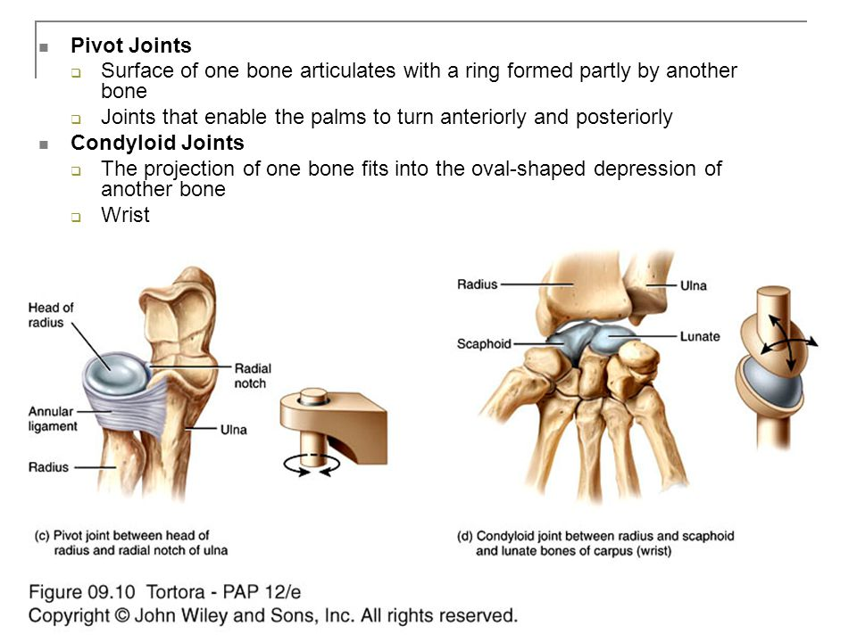 Copyright 2009, John Wiley & Sons, Inc. Pivot Joints  Surface of one bone articulates with a ring formed partly by another bone  Joints that enable