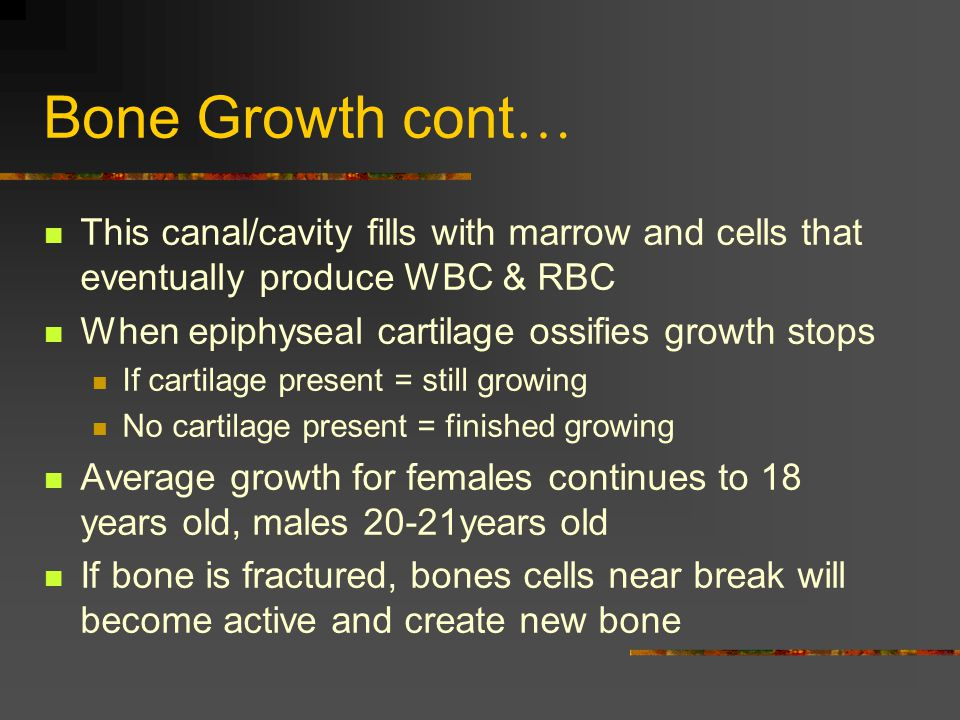 Bone Growth cont … This canal/cavity fills with marrow and cells that eventually produce WBC & RBC When epiphyseal cartilage ossifies growth stops If