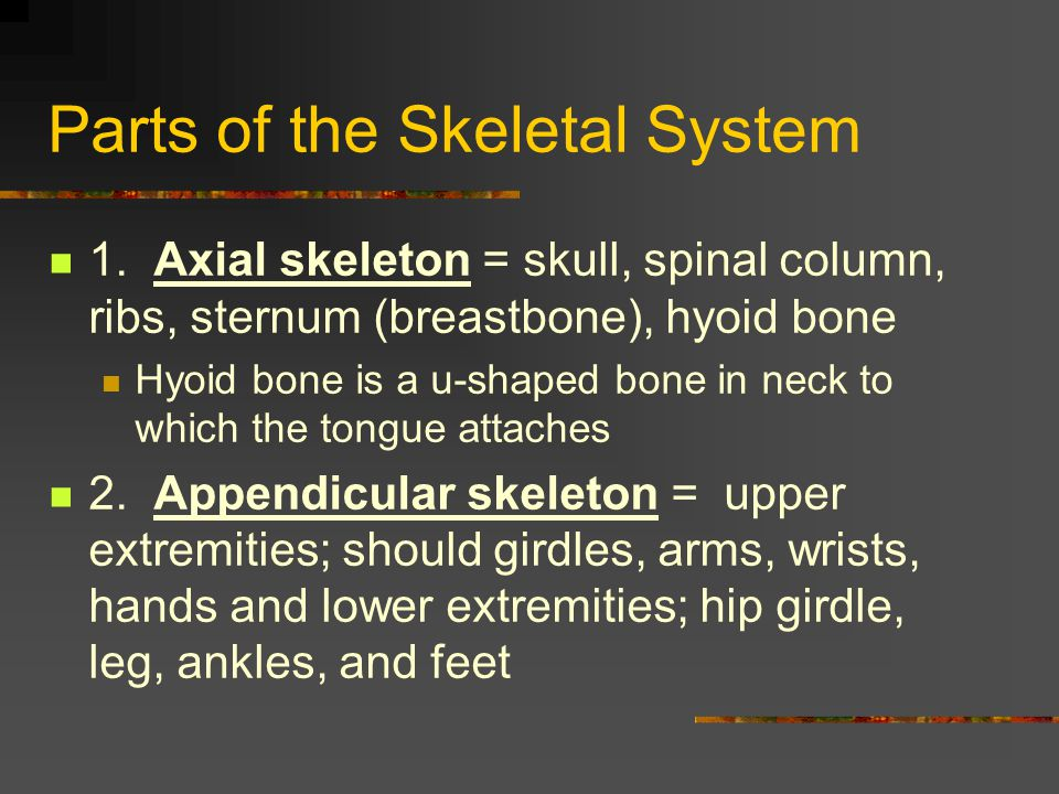 Parts of the Skeletal System 1. Axial skeleton = skull, spinal column, ribs, sternum (breastbone), hyoid bone Hyoid bone is a u-shaped bone in neck to