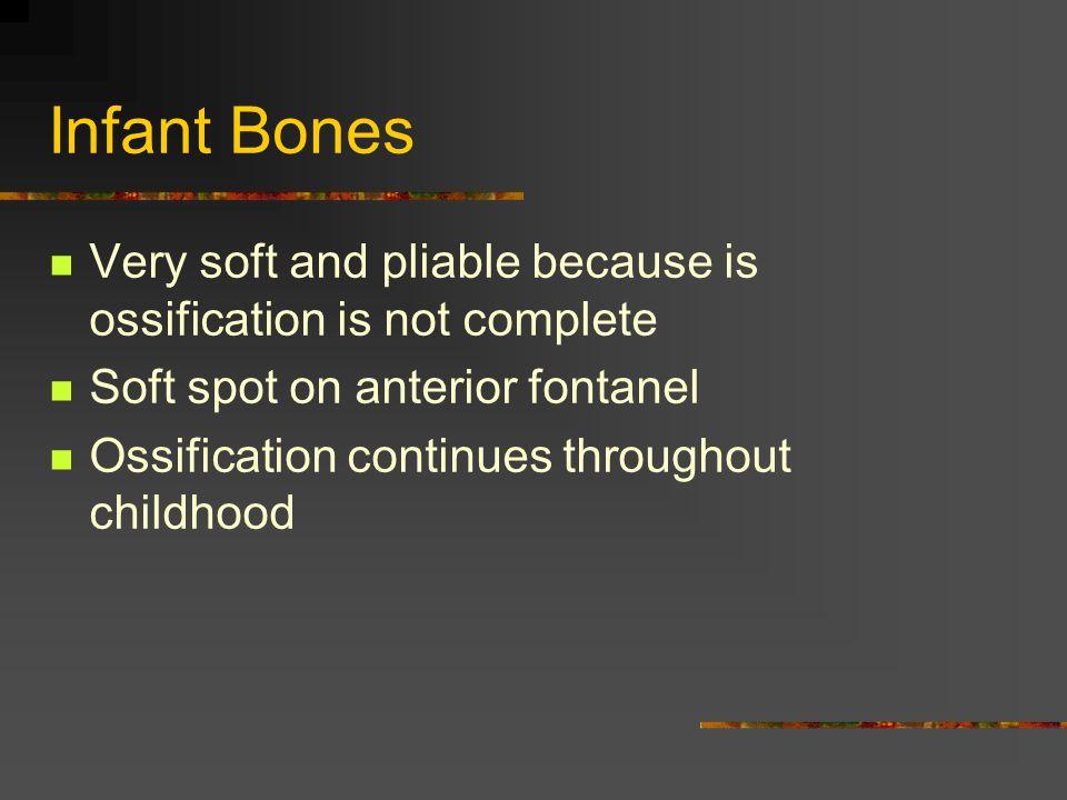 Bone Types 1.Long bones (found in extremities) 2.