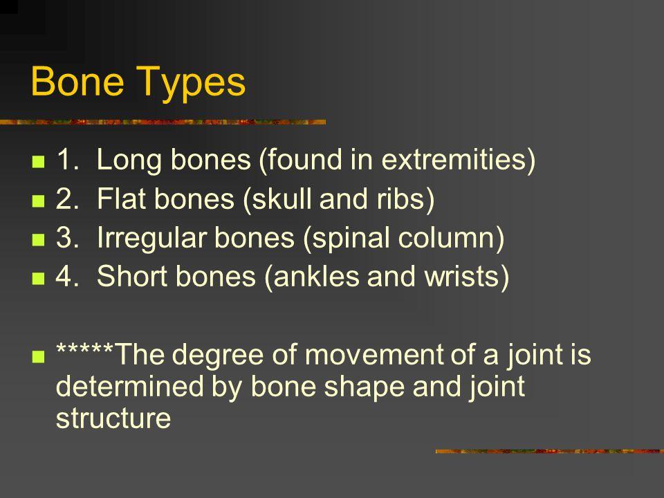 Bone Types 1. Long bones (found in extremities) 2. Flat bones (skull and ribs) 3. Irregular bones (spinal column) 4. Short bones (ankles and wrists) *