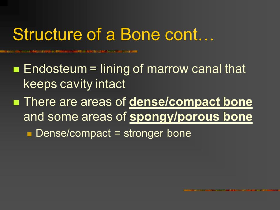 Basic Vertebra Parts Body – large, solid part Foramen – central opening for spinal cord Processes – 2 wing-like bony structures above foramen Spinous process (spine) Articular processes