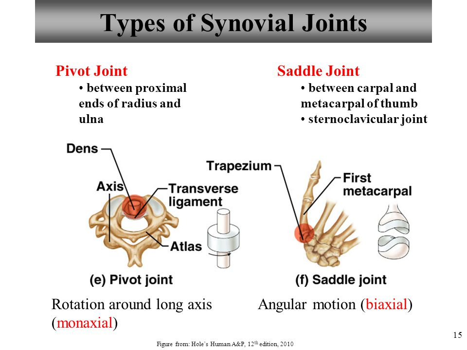 15 Types of Synovial Joints Pivot Joint between proximal ends of radius and ulna Saddle Joint between carpal and metacarpal of thumb sternoclavicular