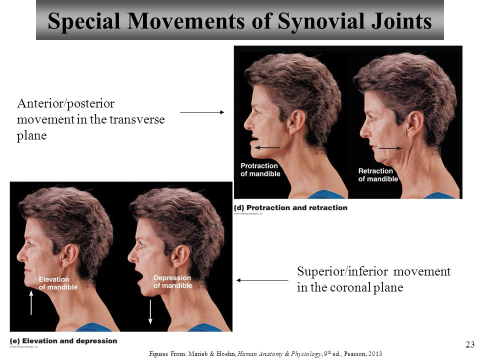 23 Special Movements of Synovial Joints Anterior/posterior movement in the transverse plane Figures From: Marieb & Hoehn, Human Anatomy & Physiology,