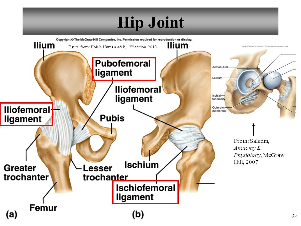 34 Hip Joint From: Saladin, Anatomy & Physiology, McGraw Hill, 2007 Figure from: Hole's Human A&P, 12 th edition, 2010