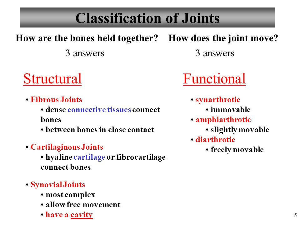 5 Classification of Joints Fibrous Joints dense connective tissues connect bones between bones in close contact Cartilaginous Joints hyaline cartilage