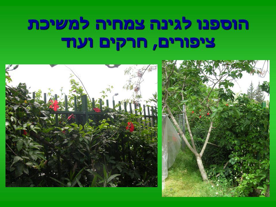 ויצרנו גינה ירוקה ומזמינה