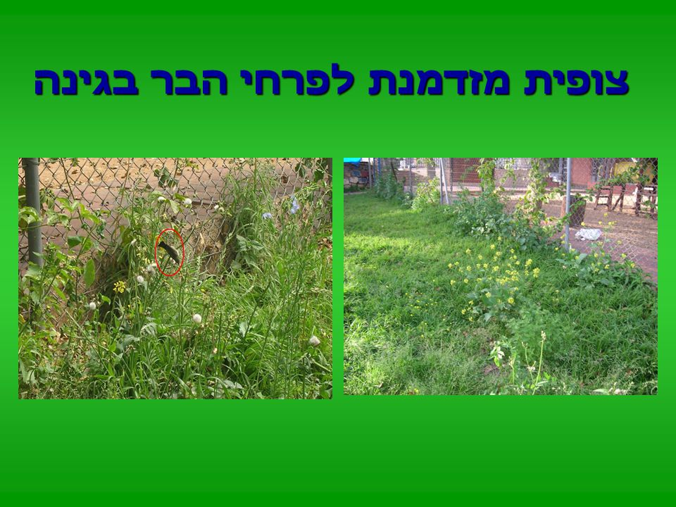 הוספנו לגינה צמחיה למשיכת ציפורים, חרקים ועוד