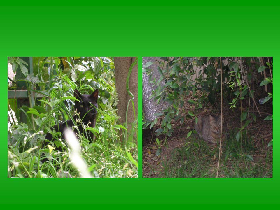 חתולים מזדמנים בגינה שלנו