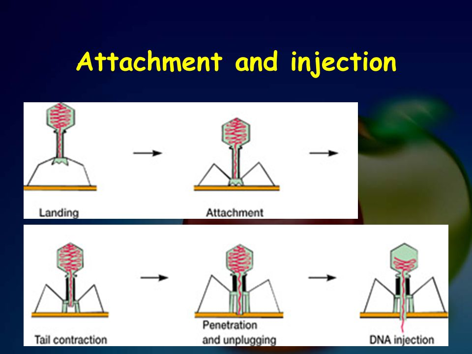 Attachment and injection