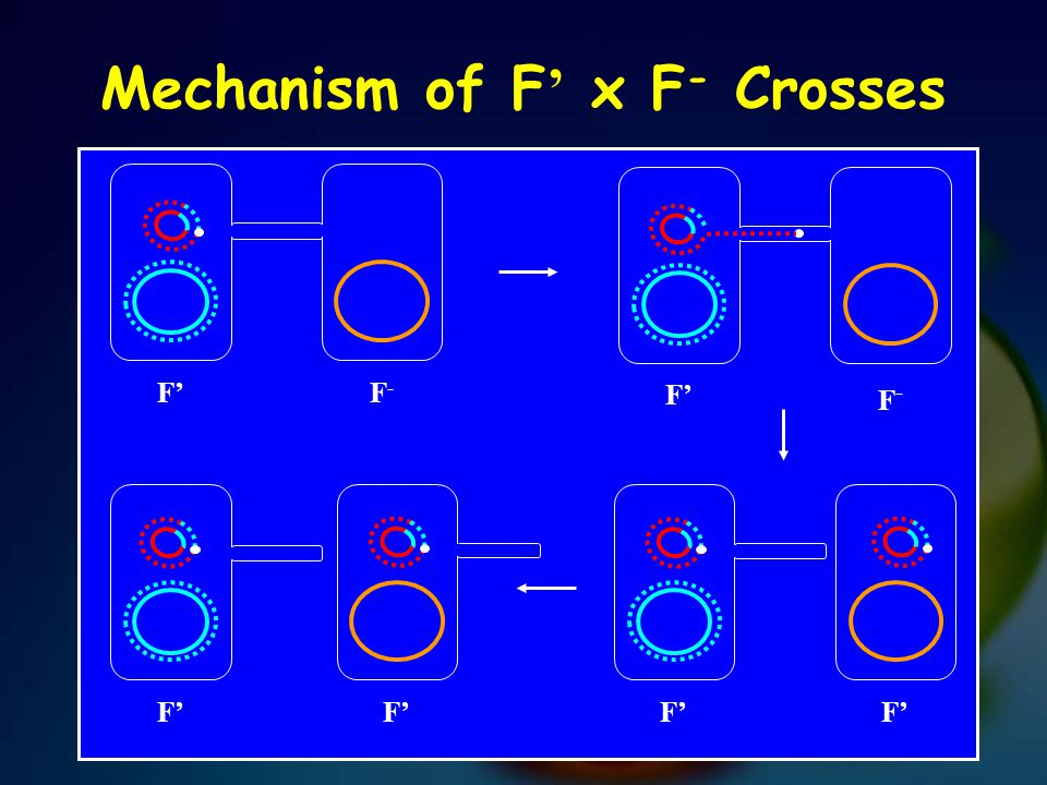 Mechanism of F ' x F - Crosses F' F-F- F-F-