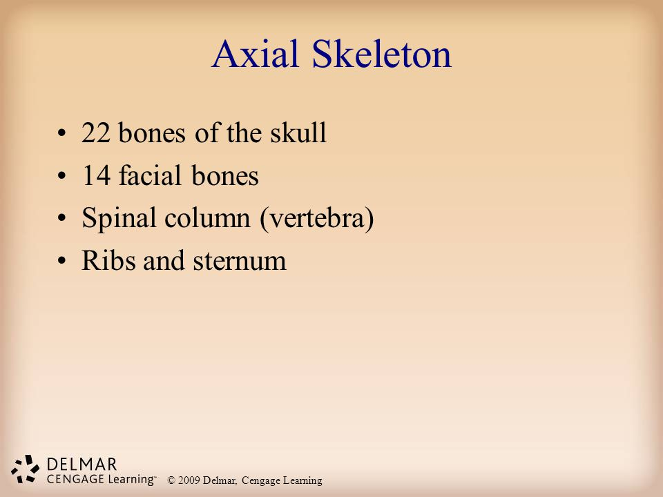 © 2009 Delmar, Cengage Learning Axial Skeleton 22 bones of the skull 14 facial bones Spinal column (vertebra) Ribs and sternum