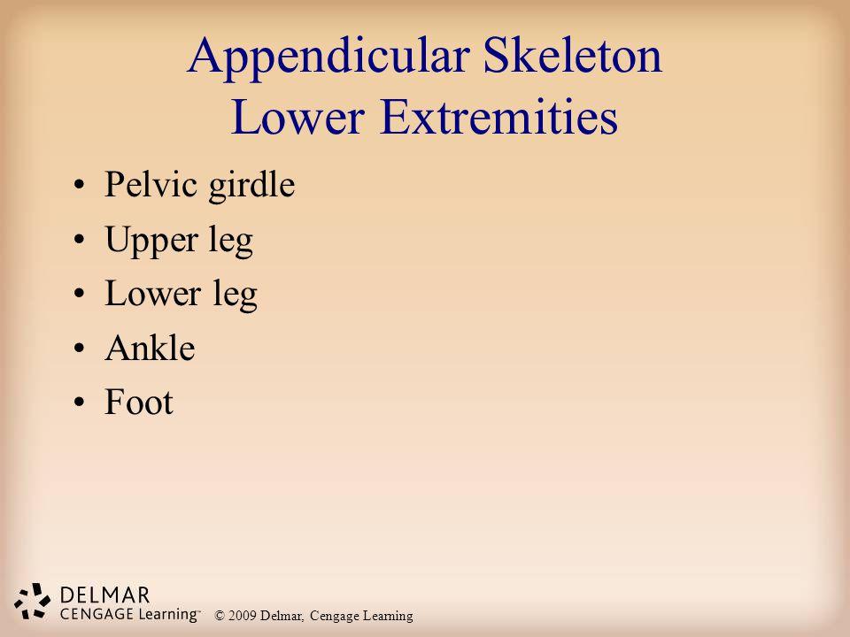 © 2009 Delmar, Cengage Learning Appendicular Skeleton Lower Extremities Pelvic girdle Upper leg Lower leg Ankle Foot
