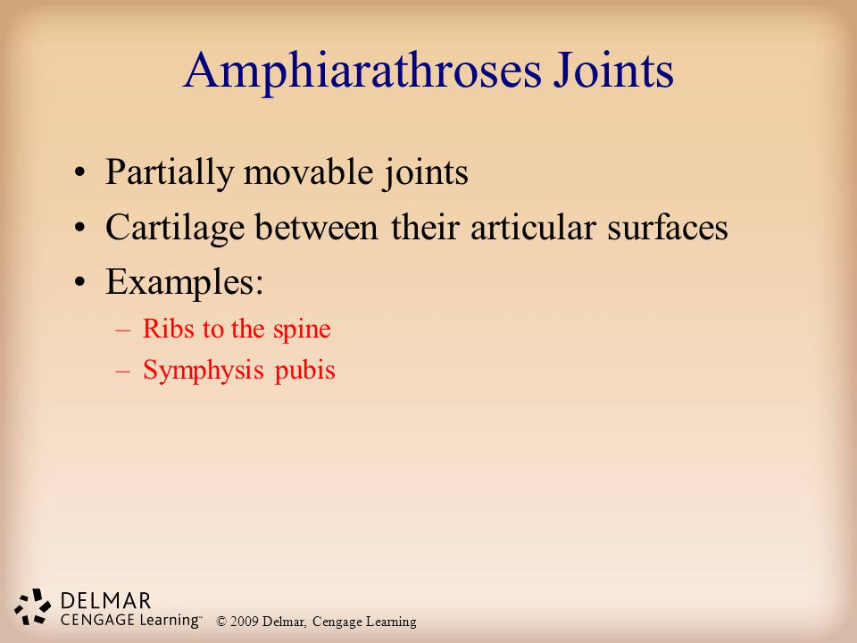 © 2009 Delmar, Cengage Learning Amphiarathroses Joints Partially movable joints Cartilage between their articular surfaces Examples: –Ribs to the spin