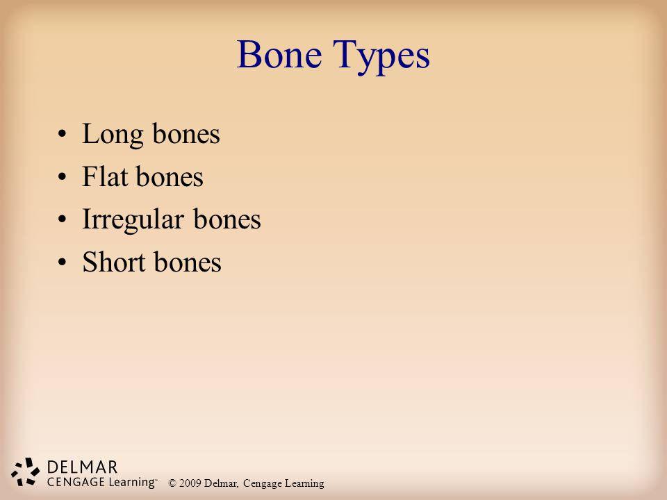 © 2009 Delmar, Cengage Learning Bone Types Long bones Flat bones Irregular bones Short bones