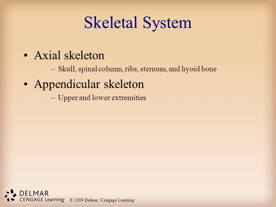 © 2009 Delmar, Cengage Learning Skeletal System Axial skeleton –Skull, spinal column, ribs, sternum, and hyoid bone Appendicular skeleton –Upper and l