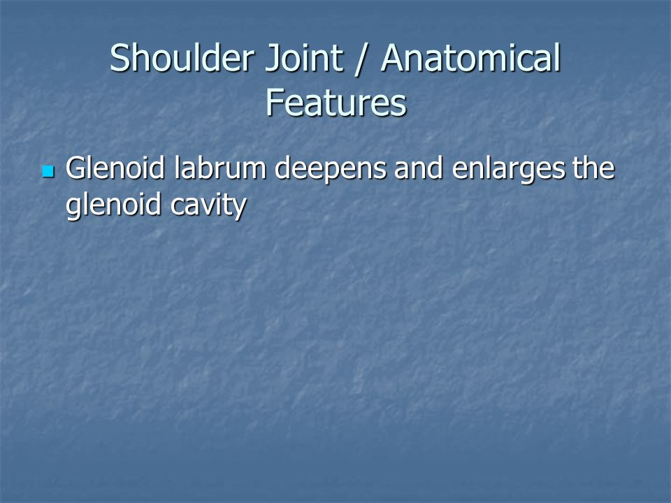 Shoulder Joint / Anatomical Features Glenoid labrum deepens and enlarges the glenoid cavity Glenoid labrum deepens and enlarges the glenoid cavity