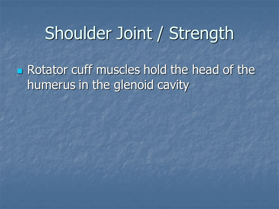 Shoulder Joint / Strength Rotator cuff muscles hold the head of the humerus in the glenoid cavity Rotator cuff muscles hold the head of the humerus in