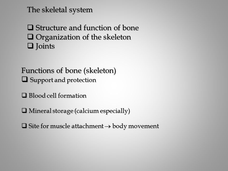 The skeletal system  Structure and function of bone  Organization of the skeleton  Joints Functions of bone (skeleton)  Support and protection  Blood cell formation  Mineral storage (calcium especially)  Site for muscle attachment  body movement
