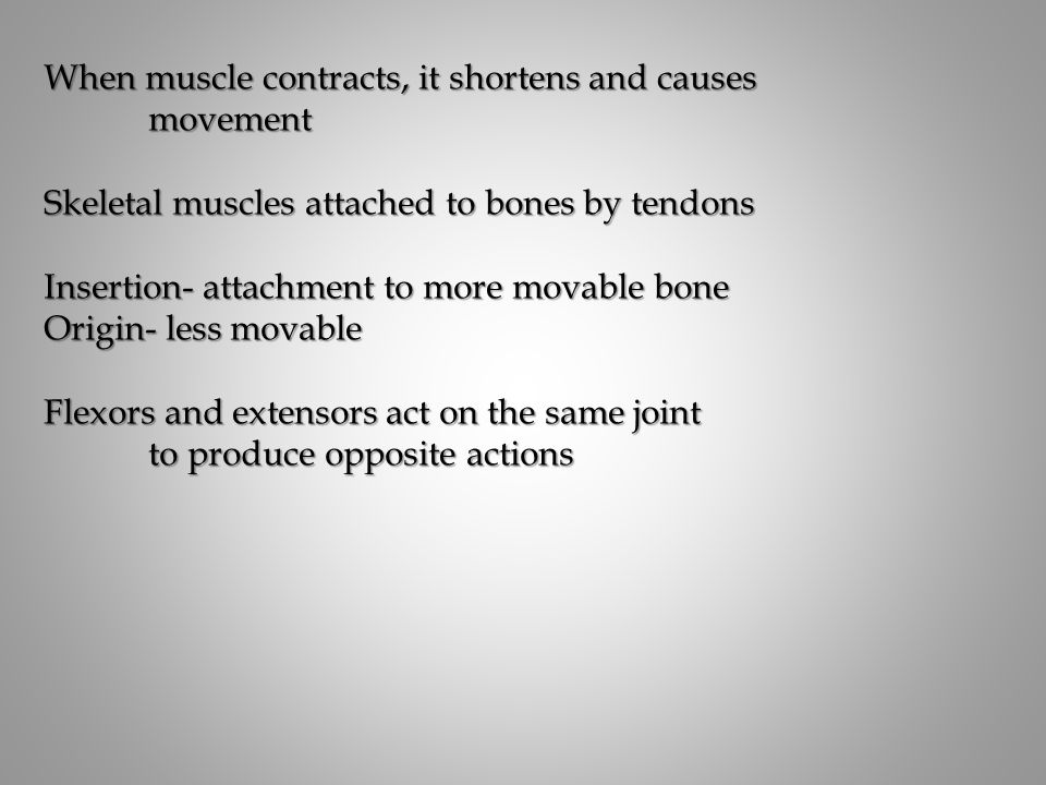 When muscle contracts, it shortens and causes movement Skeletal muscles attached to bones by tendons Insertion- attachment to more movable bone Origin- less movable Flexors and extensors act on the same joint to produce opposite actions