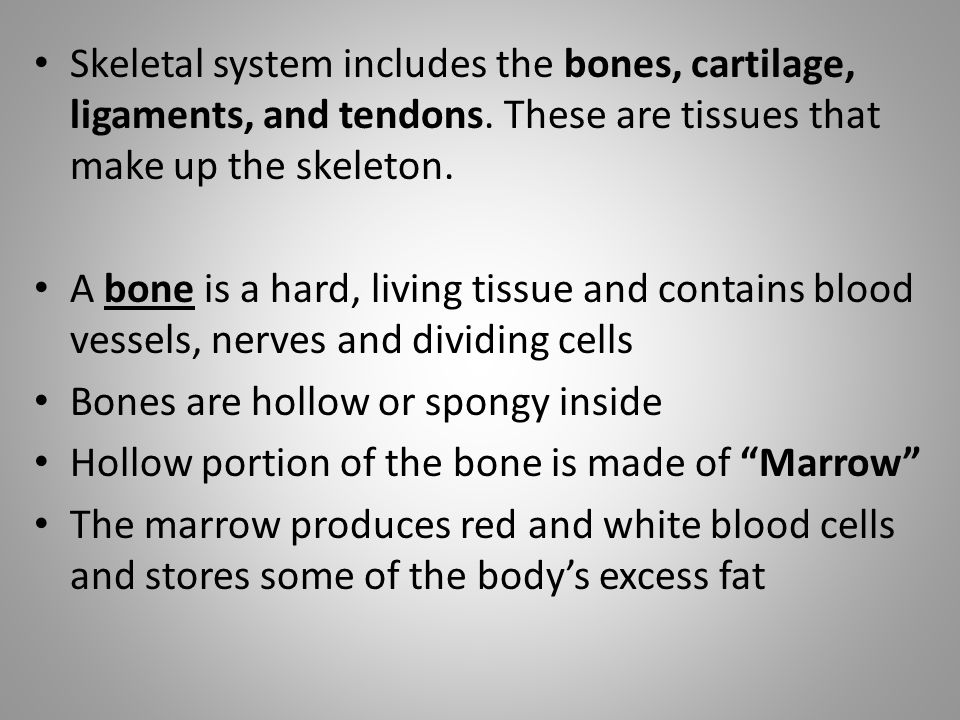 Skeletal system includes the bones, cartilage, ligaments, and tendons.