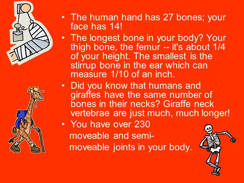 The human hand has 27 bones; your face has 14.The longest bone in your body.